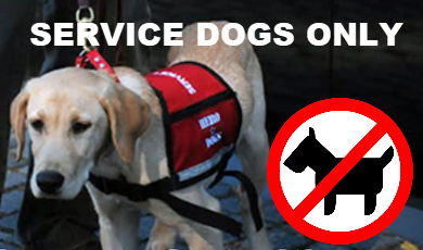 Service Dogs Only