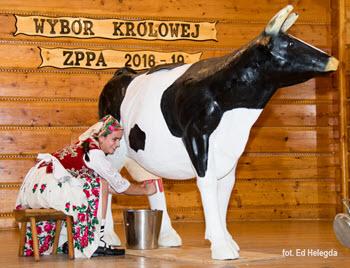 Highlander Day - Cow milking